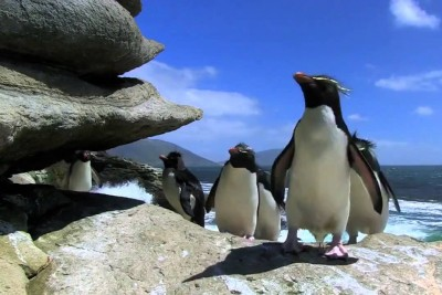 Penguins May Be Agile In Water But On Land, They Are So Hilarious