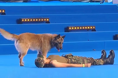 Woman Falls To The Ground During Competition. Dog's Next Move Is Putting Tears In Everyone's Eyes