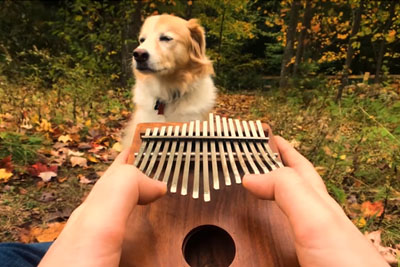 Musician Plays Elvis Presley's Classic On Kalimba, Even His Dog Enjoys It