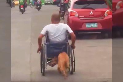 Opazil je psa, ki se je plazil za invalidskim vozičkom. Kar je posnel, obkroža svet...