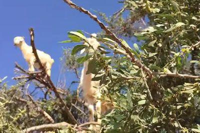 VIDEO: Povsem od blizu je posnel drevo, na njem so bile te posebne živali