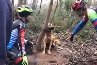 ŠOK: Sredi gozda naleteli na privezanega kužka, življenje so mu rešili kolesarji