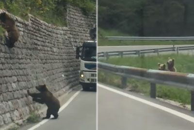 VIDEO: Med vožnjo ostala brez besed! Pot so ji prekrižali medvedji mladički...