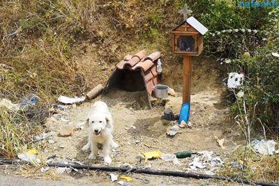 Kuža ganil svet: Že 18 mesecev čaka na mestu, kjer je umrl njegov lastnik!