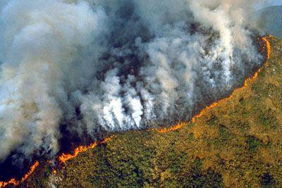 Grozljiv posnetek iz Brazilije, Amazonski pragozd uničujejo ognjeni zublji