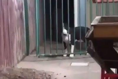 SMEH: Kuža ni mogel mimo železne ograje: Poglej, kako mu je pomagal drug pes!