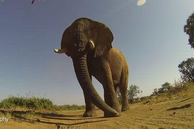 Na avtomobilček je namestil kamero, nato je z njim zapeljal pred slona