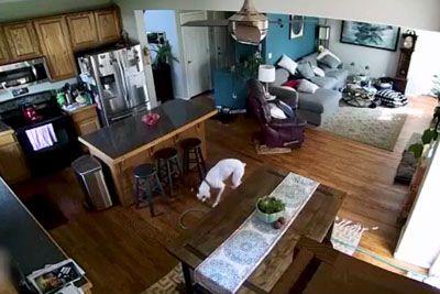 Kuža v hišo prinesel cev za zalivanje: Nastala je prava zmešnjava!
