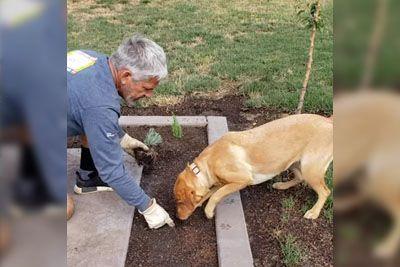 Lastniku med sajenjem rož na pomoč priskočil kuža: Poglej, kako mu je pomagal!