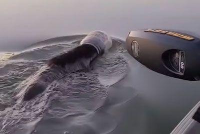 Družina rešila nesrečnega medveda: Plaval je s kozarcem na glavi!