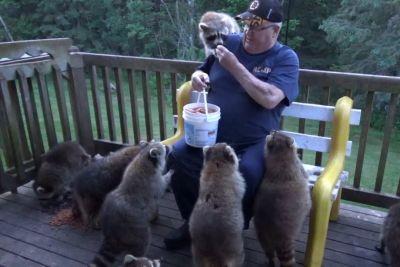 Moški iz Kanade vsak dan sede na teraso: Že 25 let skrbi za rakune!