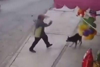 Moški brcnil kužka, ker je lajal nanj: Takoj je dobil lekcijo!