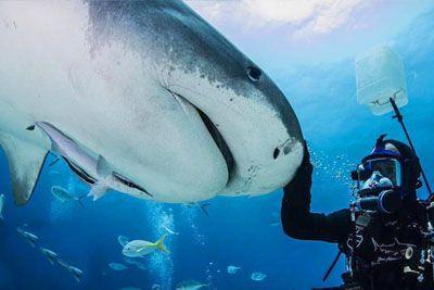 Potapljač posnel prizor z morskim psom: Že 20 let sta najboljša prijatelja!