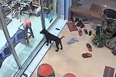Izgubljeni kuža na ulici prepoznal veterinarja: Tako ga je prosil za pomoč!