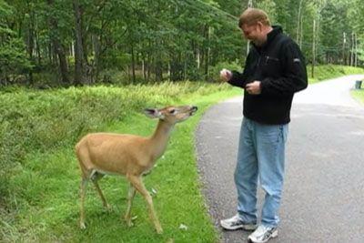 Med sprehodom je srečal košuto: Poglej, kakšen prizor je posnel!