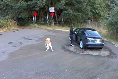 Posnetek, ki je razjokal svet: Ženska zapustila svojega psa, kot da je smet!