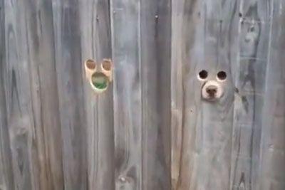 Prizor pri sosedih, ki jo je nasmejal do solz: To je posnela, ko je prišla domov!