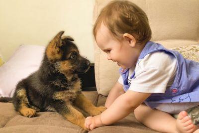 Deklica je prvič videla pasjega mladička: Posnetek ti bo polepšal dan!