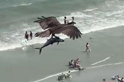 Orel v zraku letel z ogromno ribo, podobno morskemu psu