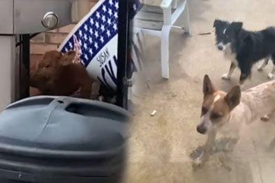 Lastnik je pozdravil svoja kužka: Domov sta pripeljala posebno bitje!