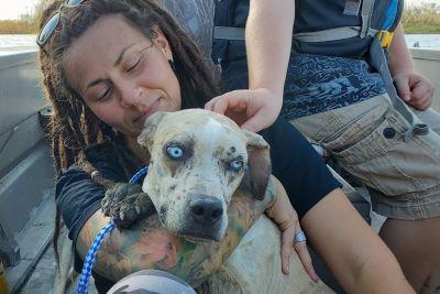 Na otoku so našli zapuščenega psa: Dobri ljudje so mu rešili življenje!