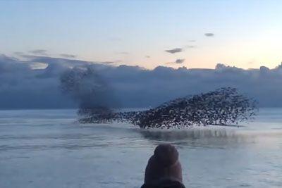 Prizor na jezeru, ki svetu jemlje sapo: Poglej, kakšen ples so pripravile ptice!