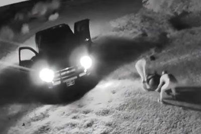 Nepridiprava poskušala ukrasti želvo, nato sta jo povozila