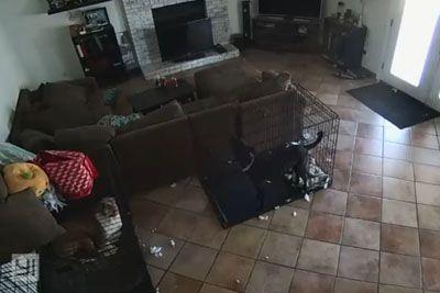 Lastnica delila posnetek iz hiše: Duh je kužku snel ovratnico!